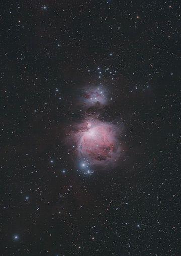 M42081126